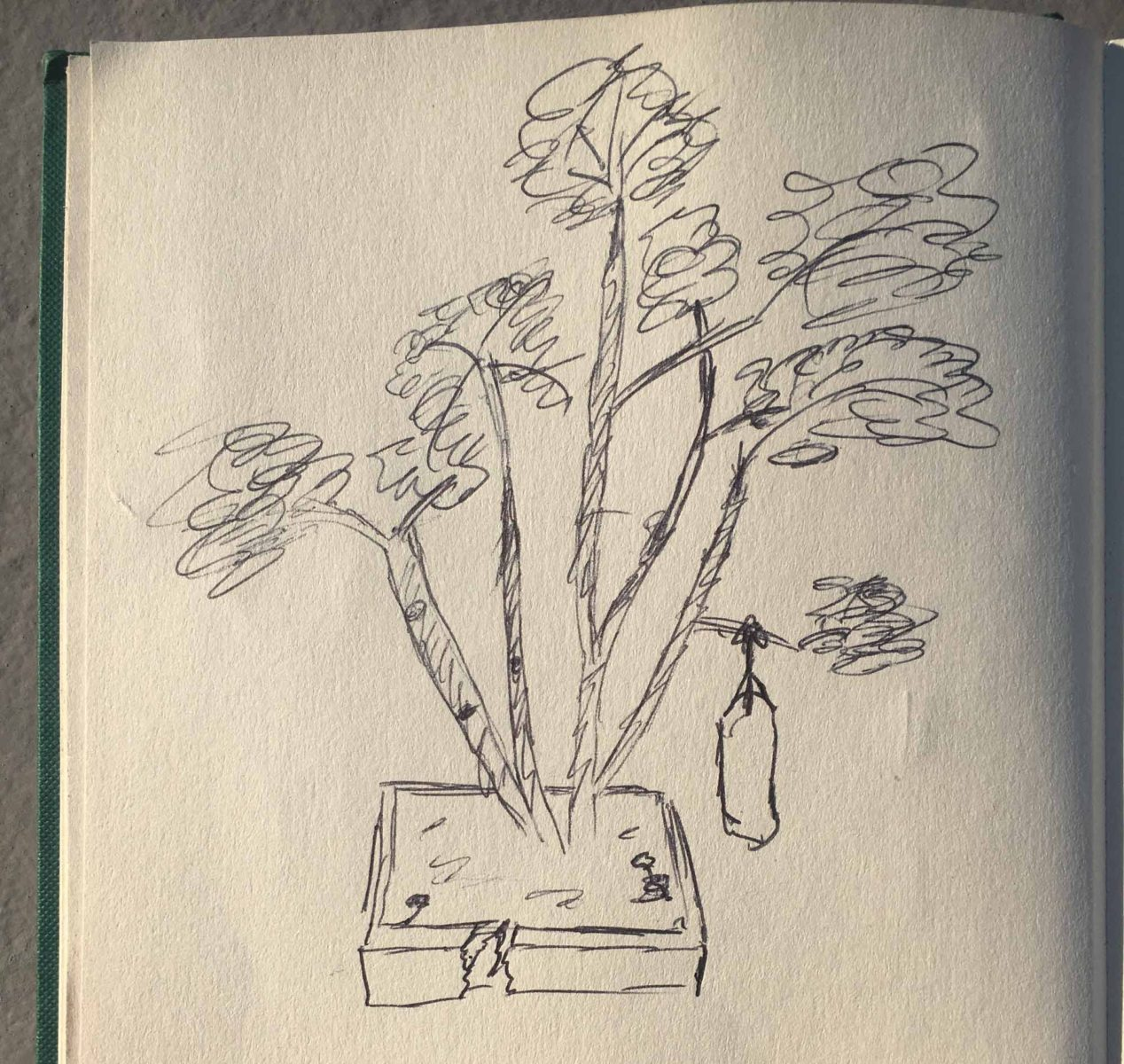 Bad drawing of tree in the hostel