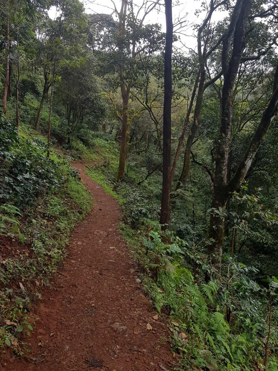 The trail to Jhari Falls