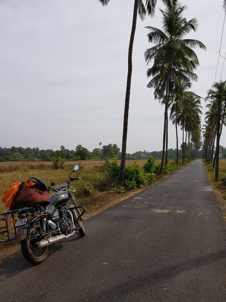 Road in Goa lined by Coconut trees